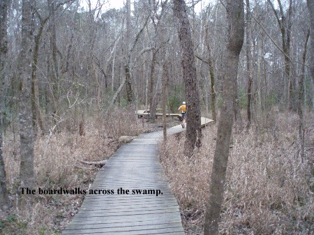 Photo of the boardwalk at Rocky Raccoon.